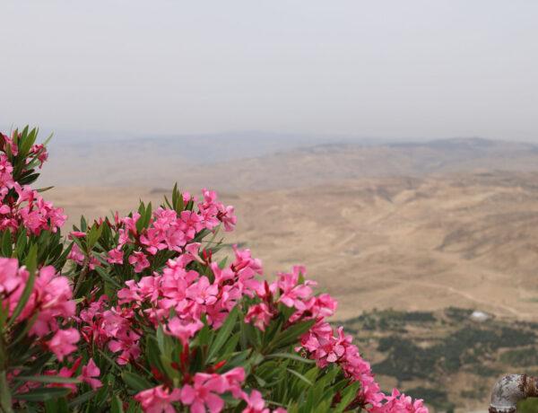 Mount Nebo, Luvattu maa