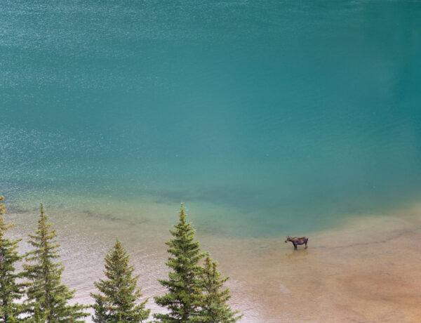 USA, Glacier National Park