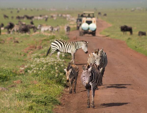 Safari ja rantaloma Sansibarilla
