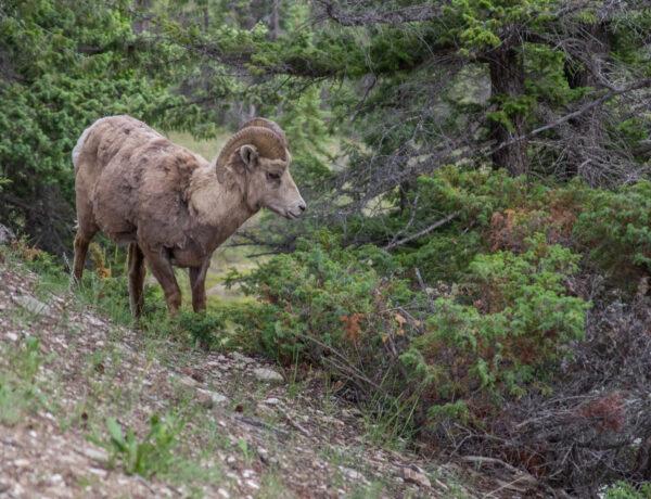 Yellowstone, Kalliovuoret