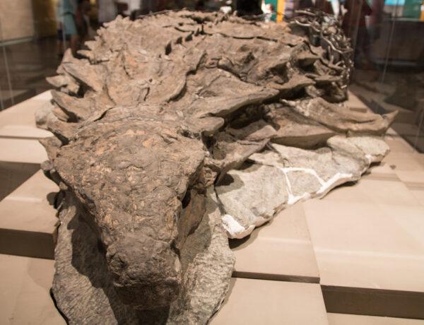 Royal Tyrrell Museum, Drumheller, dinosaurus