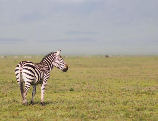 Safari budjetti