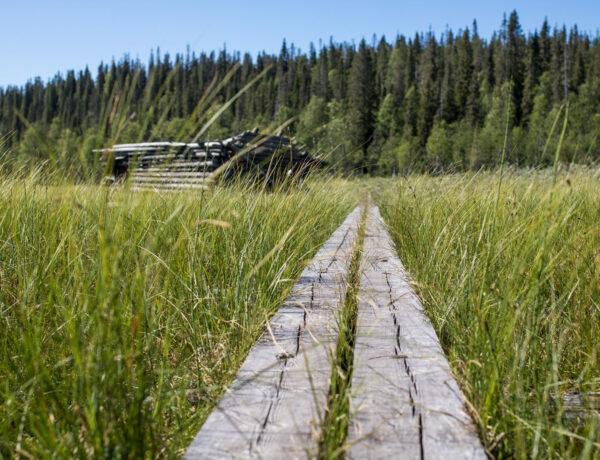 Riisin rietas, Riisitunturin kansallispuisto