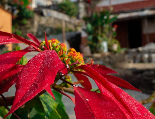 Sarangkot, päiväretki Pokharasta